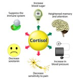 8 Tips to Lowering Cortisol Naturally