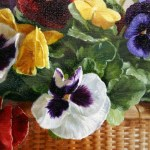 Pansies detail