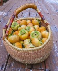 basket of persimmons