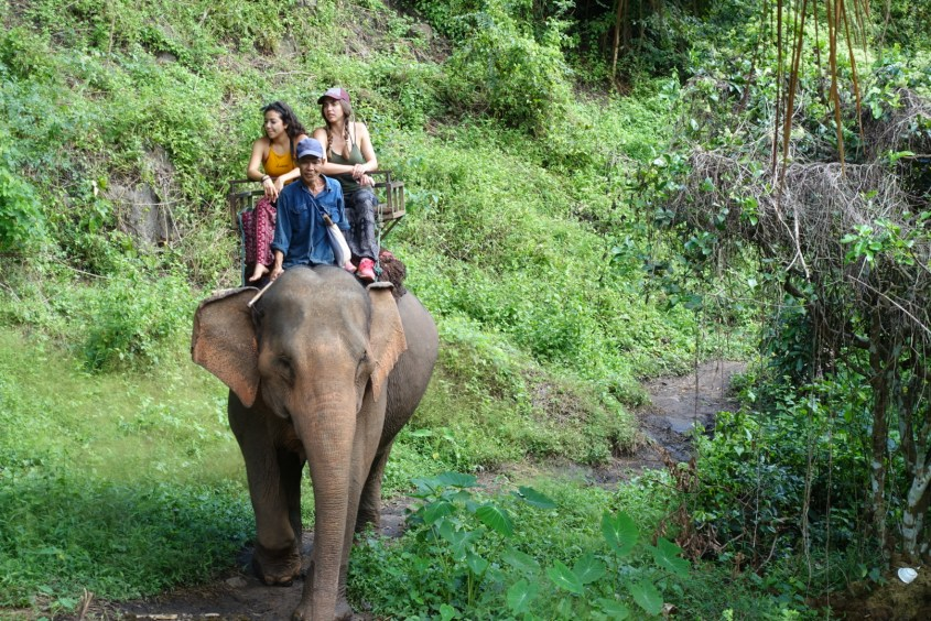 elephant ride in Chiang Mai Thailand
