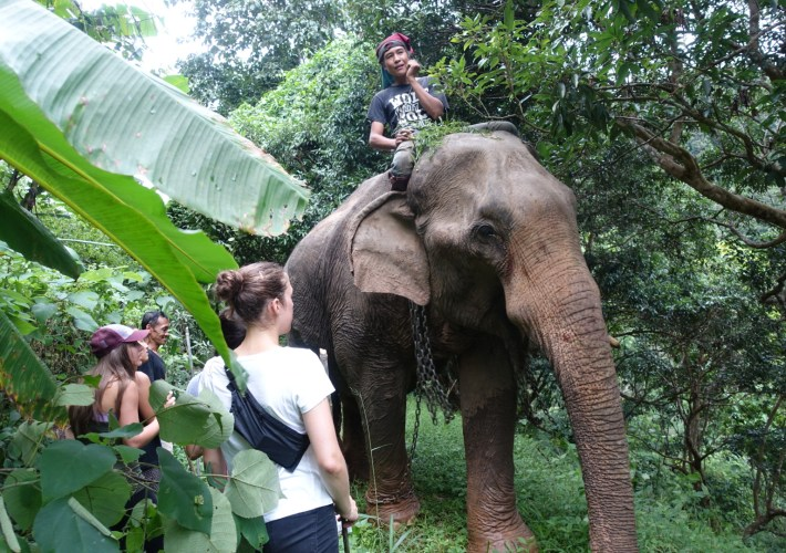 elephant ride plus mountain trekking in Chiang Mai Thailand