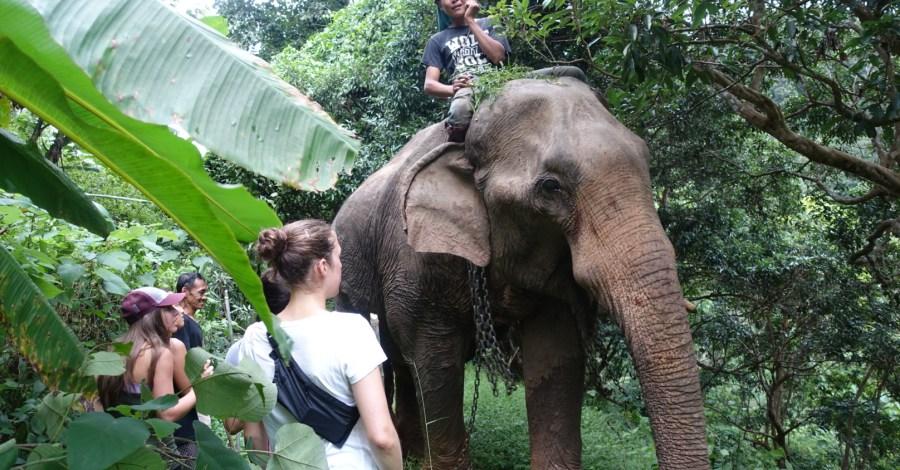elephant ride plus mountain trekking in Chiang Mai Thailand