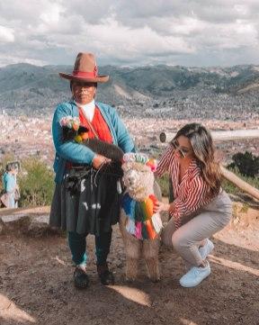 Alpaca in Cusco with views