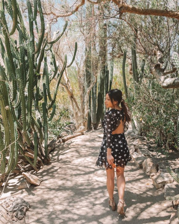 botanical garden in Palm Springs California, cute dress, dessert outfit, creative photography