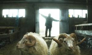 Film Review: Rams