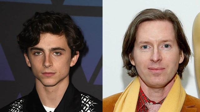 timothee-chalament-wes-anderson.jpg