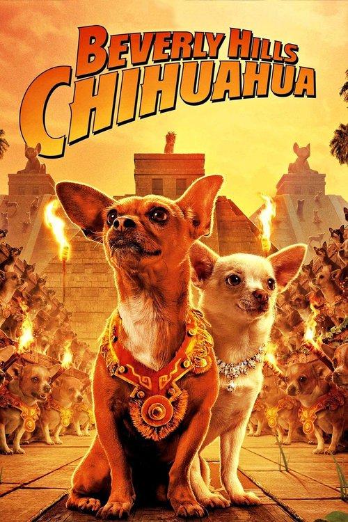 Chihuahuan från Beverly Hills