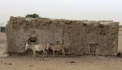 mauritania (111)