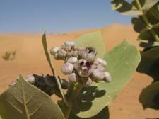 mauritania (48)