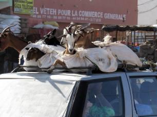 mauritania (84)