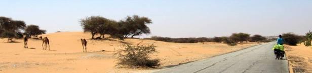 mauritania (91)