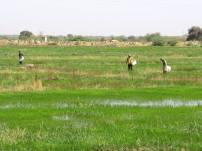 mauritania (98)