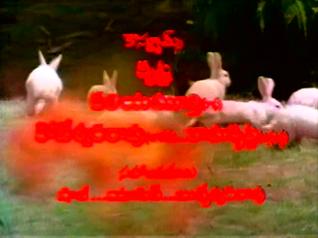 CinemaChaat_Adavi-Donga_rabbits