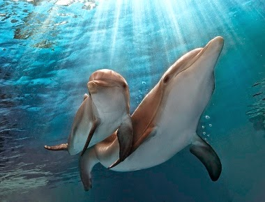 Blu-ray Review: Dolphin Tale 2
