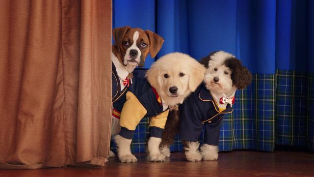 Academia de Cachorros.jpg