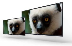 Sony 4K OLED monitor