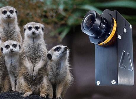 Meerkat Mini Camera