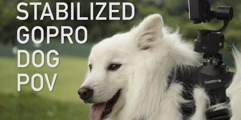 A Dog Reviews The Zhiyun Rider-M