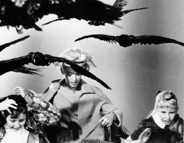 the_birds_5