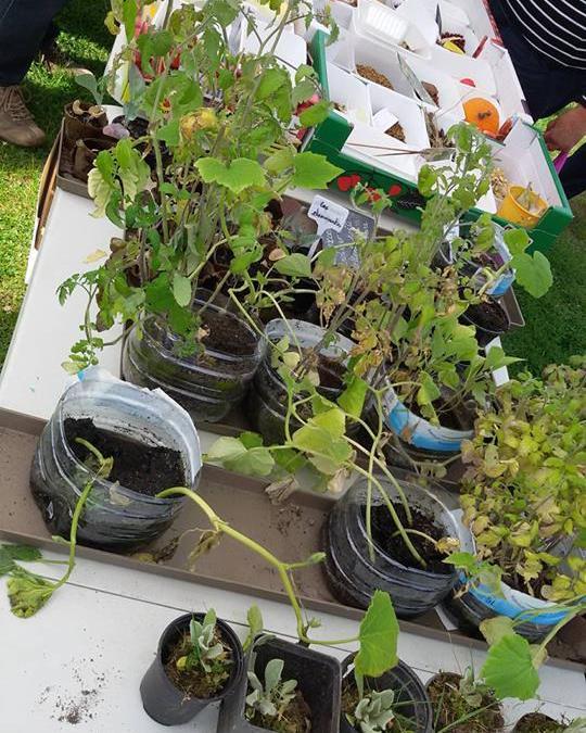 Succès pour l'échange de plantes 'Qu'est-ce qu'on sème!'