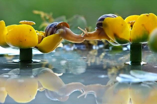 Historia de caracoles en fotos