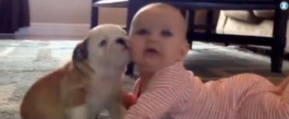 Bulldog y un bebé