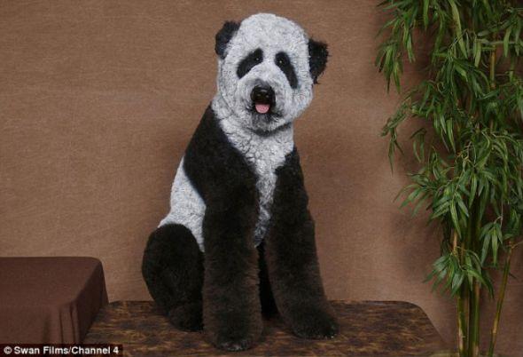 Pinta como un panda a tu perro