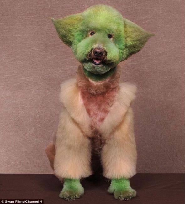 Disfraza a tu perro como Yoda