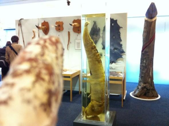 Museo del pene en Islandia