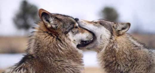 Por qué nos besamos en la boca