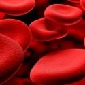 Sangre universal