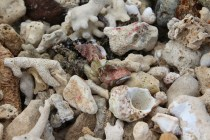 Two hermit crabs close up