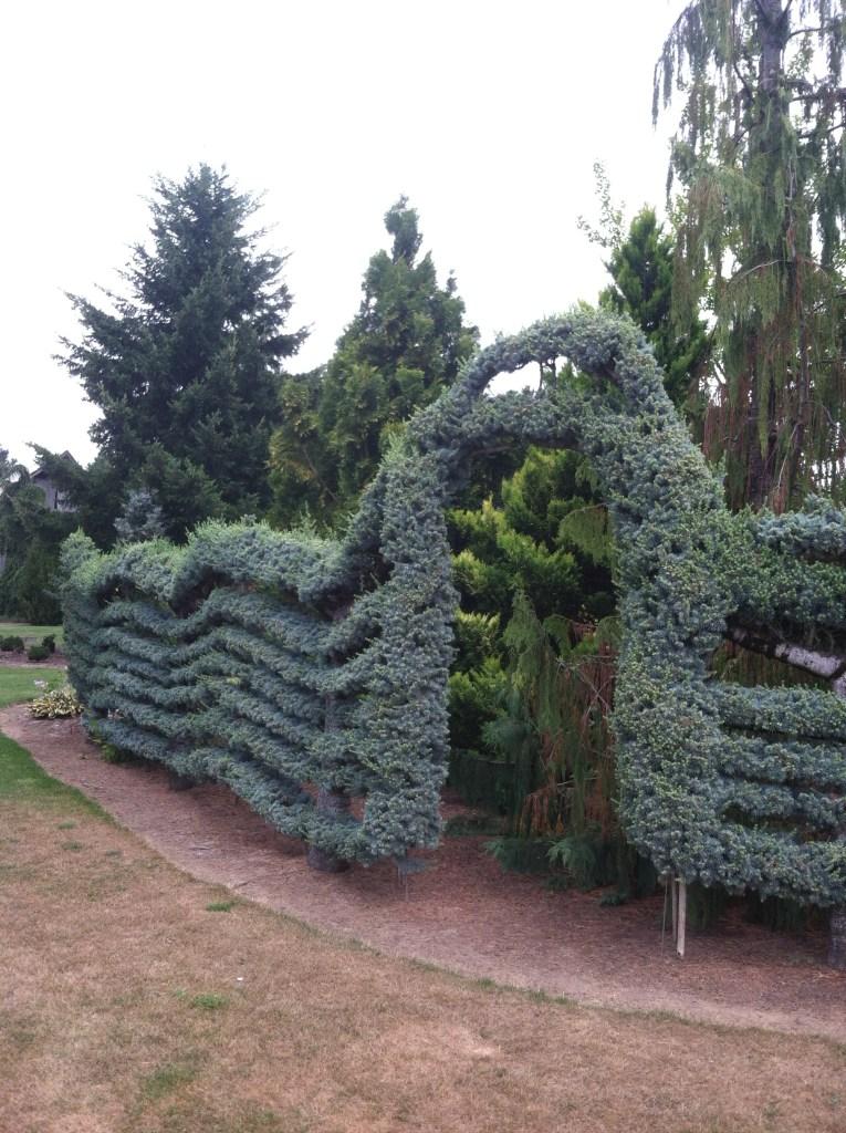 conifer garden, transplanted and still blooming, cinthia milner, jon merrill