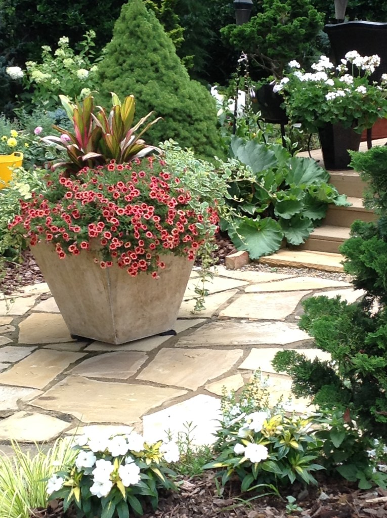 Container Gardening with edibles, Transplanted and Still Blooming, Cinthia Milner