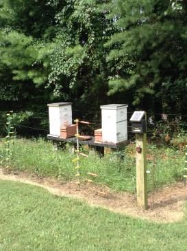 BB Barns Garden Center, Garden Tours, Beehives, Transplanted and Still Blooming, Cinthia Milner