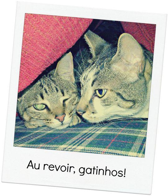 au_revoir_gatos