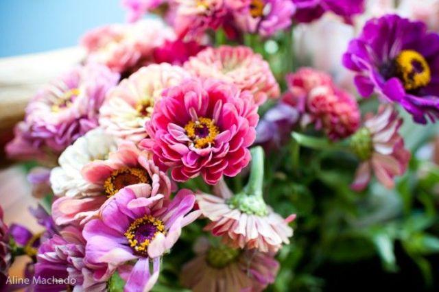 Flores coloridas - primavera. Foto: Aline Machado.