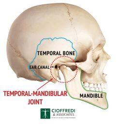 tmj anatomy illustration [ 1024 x 1024 Pixel ]