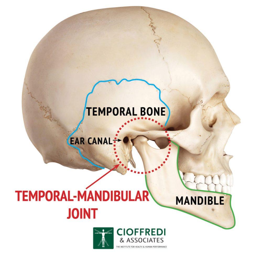 medium resolution of tmj anatomy illustration