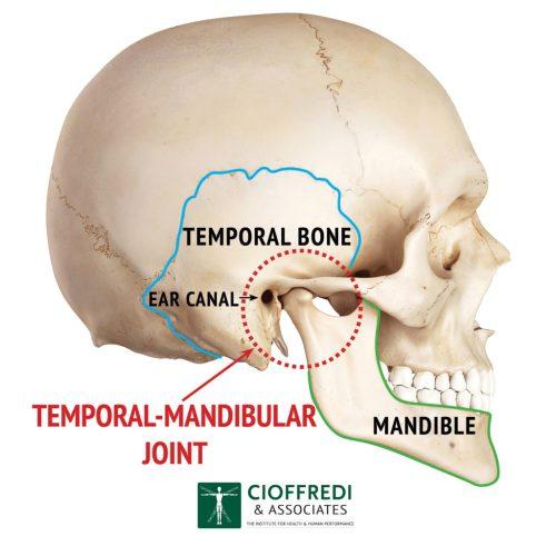 small resolution of tmj anatomy illustration