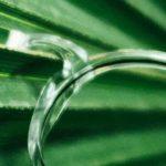 eco neubau eyewear with castor oil plants