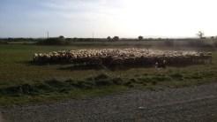 aitas ar sunņu pieskatītājiem (draudzīgirm)
