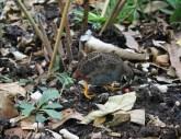 Animals in natural garden ecology