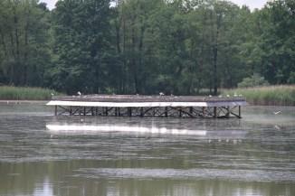 Breeding platform for birds