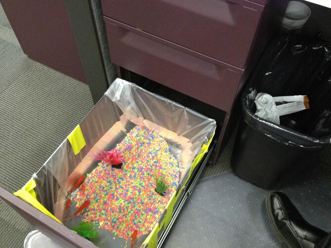 Office prank with desk drawer filled with water and fish