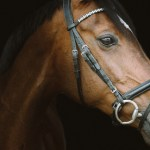 cushing paard