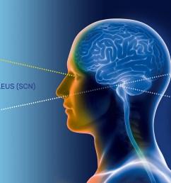 how does the suprachiasmatic nucleus scn control circadian rhythm  [ 1920 x 923 Pixel ]