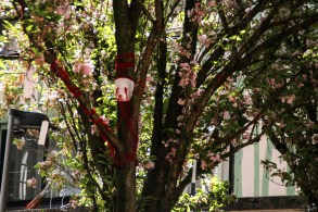 tree@zaarphotography