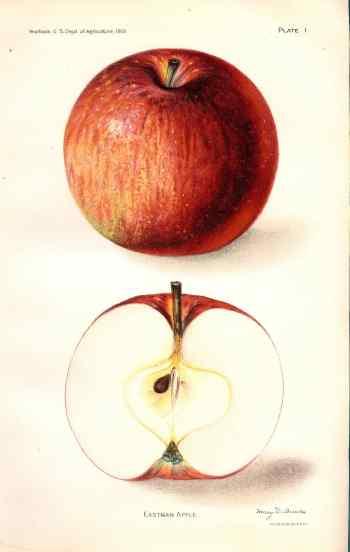 455 eastman apple dept of ag 1912