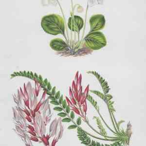 Antique Flowers & Ferns